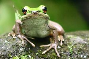 The Frog Prince ???